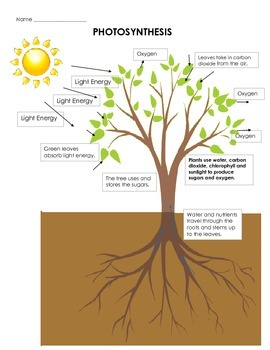 Visualizing Plant Photosynthesis: Drawing, Cut & Paste, Pr