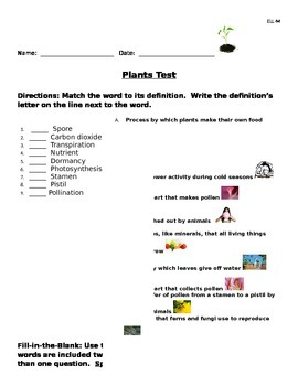 """Visually Rich """"Plants"""" Science Test"""