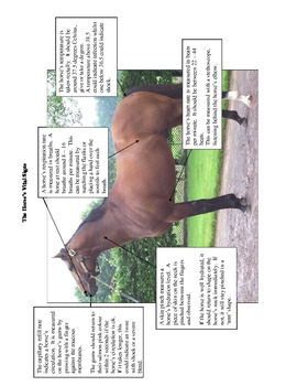 Vital Signs of the Horse Activity