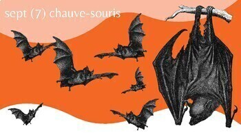 Vocab: L'Halloween en Français et Les Nombres 1-20