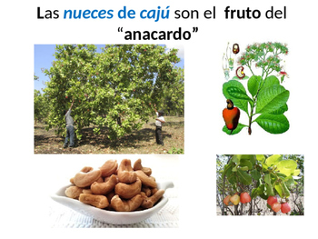 Vocabulario : Los frutos secos
