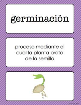 Vocabulario de ciencias Fusión Spanish 4th Grade