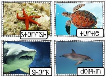 Vocabulary Card Bundle