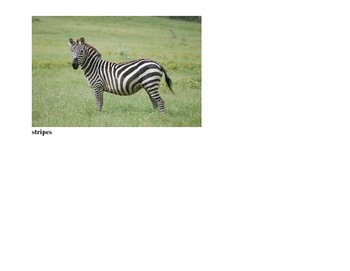 Vocabulary Cards for Lesson on Animal Physical Characteristics