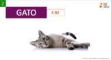 Vocabulary Exercise  ( Domestic animals)+ 15 Vocabulary exercises