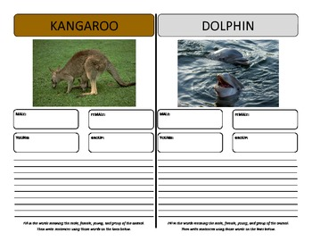 Vocabulary Graphic Organizers - for animals males, females, young, groups