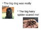 Vocabulary Power Point for Dogs