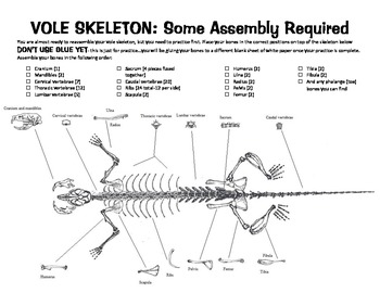 Vole Skeleton template for Owl pellets