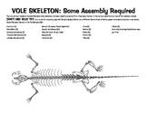 Vole Skeleton template for Owl pellets