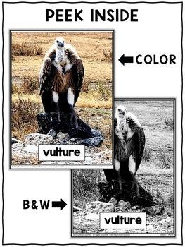 Vulture Close Reading Passage Activities