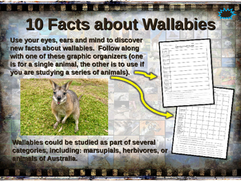 WALLABIES - visually engaging PPT w facts, video links, ha