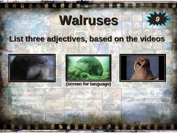 WALRUS: 10 facts. Fun, visual, engaging PPT (w links & free graphic organizer)