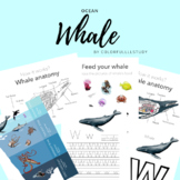WHALE ANATOMY (OCEAN LAYERS) - by colorfullllstudy