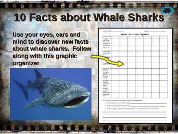WHALE SHARKS: 10 facts. Fun, engaging PPT (w links & free graphic organizer)