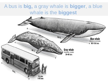 WHALES:Adjectives and Superlatives