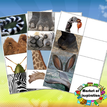 WHAT ANIMAL IS IT? BODY PARTS