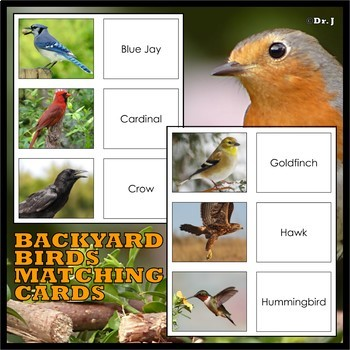 WHAT IS A BIRD? Posters and Matching Cards