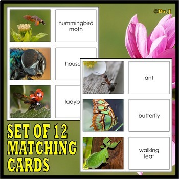 WHAT IS AN INSECT? Matching Cards and Poster Set
