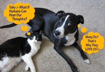 WHAT iF ANiMALs > Ponder Possibilities Through Mind Musings > FUN 4 ALL Ages!