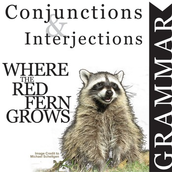 WHERE THE RED FERN GROWS Grammar Conjunctions Interjections