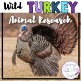 WILD TURKEY - nonfiction animal research
