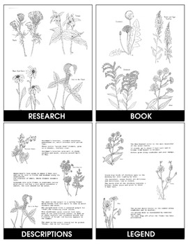 WILDFLOWERS PICTURE COLLECTION Gr. 2-8
