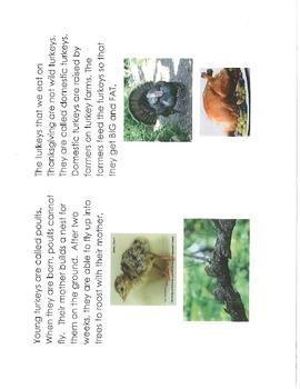 Turkeys: An Informational Book on Wild Turkeys