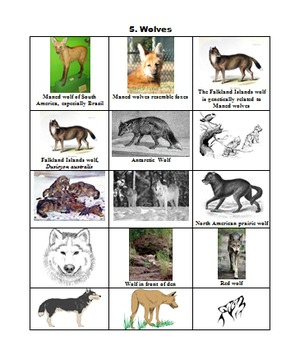 ARTS, SCIENCE, PRE-K UP: WOLVES PUBLIC DOMAIN CLIP ART (111 images)