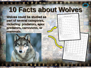 WOLVES - visually engaging PPT w facts, video links, handouts & more
