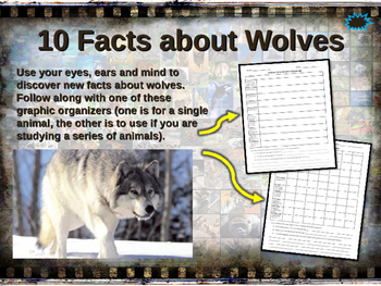 WOLVES - visually engaging PPT w facts, video links, hando