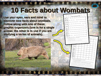 WOMBATS - visually engaging PPT w facts, video links, handouts & more