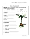 WORD STUDY ASSESSMENT