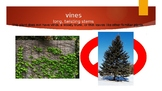 WV Journeys Oral Vocabulary Powerpoint Unit 3 Lesson 13