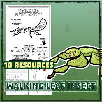 Walking Leaf Insect -- 10 Resources -- Coloring Pages, Reading & Activities