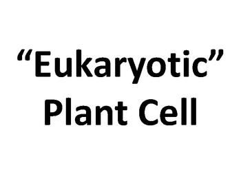 Wall Size Eukaryotic Cell Presentation Boards: TEKS 4A, 4B, 5A, 9A, 9B, 11A