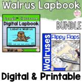 Walrus Activities Interactive Notebook Digital and Printab