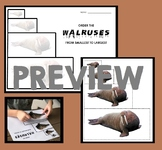 Walrus Activity - Order By Size : Smallest to Largest - Polar Animals