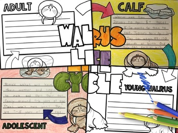 Walrus Life Cycle Activity: Collaborative Research Poster