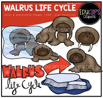 Walrus Life Cycle Clip Art Bundle {Educlips Clipart}