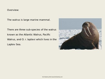 Walrus - Power Point - Information Facts Pictures Endangered
