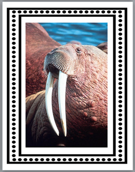 All About Walruses Science, Literacy & Crafts - Walrus Nonfiction