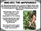 Wampanoag Powerpoint with Graphic Organizer, Quiz, and Comprehension Questions