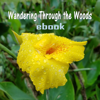 Wandering Through the Woods (ebook)