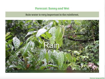 Warm, Wet, and Wild - Water, Light, and Looking Inside the Rainforest EPUB