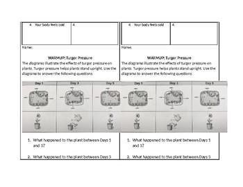 Warm-up Set: Cells, Plants, Stimulus & Response
