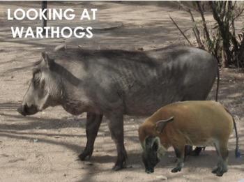Warthog - Interactive PowerPoint presentation