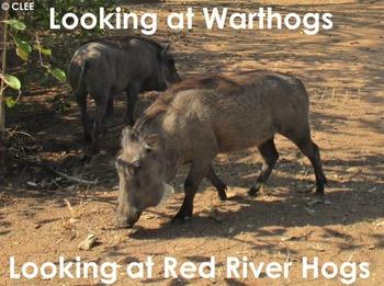 African Animals: Warthog - PDF Presentation