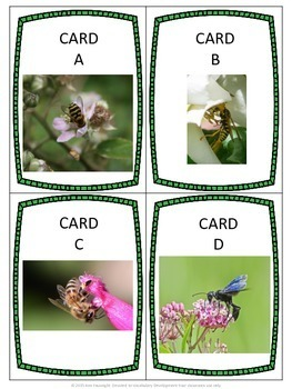 Wasps and Bees Scavenger Hunt and Identification Activity