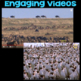 Watch a Video About Animal Group Behavior and Interactions