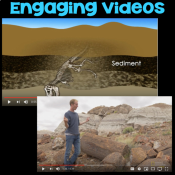 Watch a Video about Fossils or Petrified Forests
